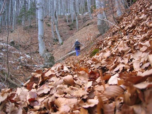 Gozd nad Povdnarjem in Koncenpoharjem